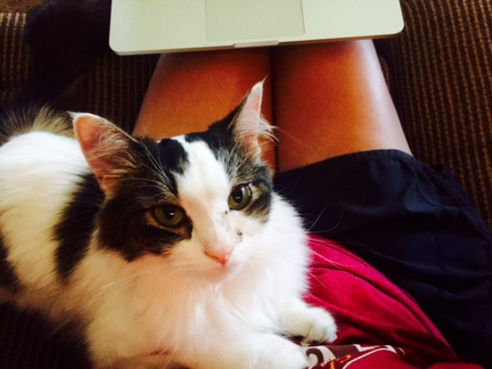 How a therapy cat helped me with my anxiety