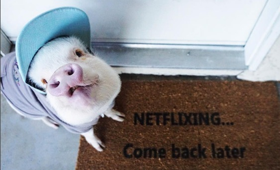 Hamlet the Piggy will be your latest Instagram pet obsession