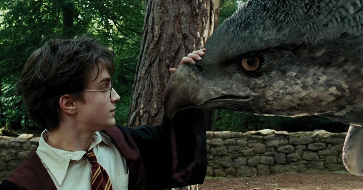 There's a video of a real life hippogriff and we're freaking out because Hogwarts must be real