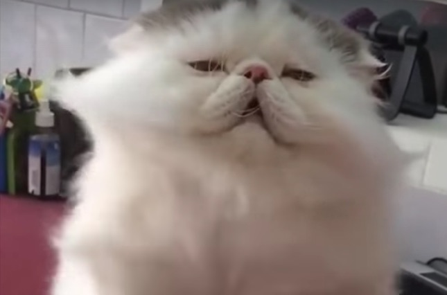 This cat is a gorgeous '80s video bombshell and we are not worthy to view his beauty