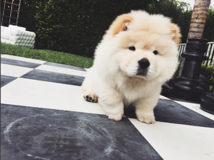 Just some adorable photos of Justin Bieber's perfect and fluffy dog Todd