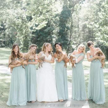 This wedding party held rescue dogs instead of bouquets and the reason is giving us so many feels