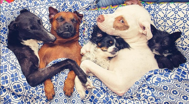 You NEED to follow this rescue dog who fosters other animals on Instagram