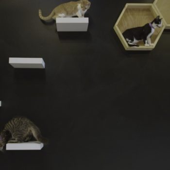 Los Angeles's First Cat Café