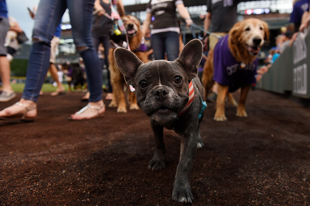 Science says this fact about dog ownership is key to living a longer life