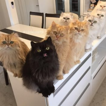 """12 cats Lady"" Instagram proves that being a cat lady is actually extremely lit"