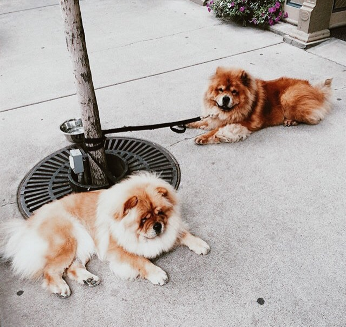 These waiting dogs are the most loyal companions and we're not squealing, you are