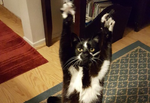 This cat who raises its arms like a field goal will have you cheering for the weekend