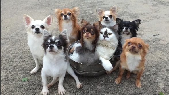 This cuddly family of dogs, cats, and a hamster redefines the definition of #squadgoals
