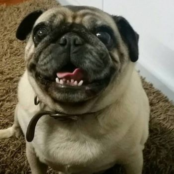 This man's viral story about losing his pet pug will make your day