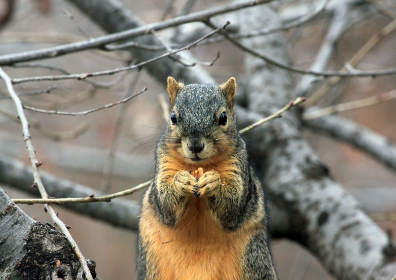 So, studies show that male squirrels are kind of useless
