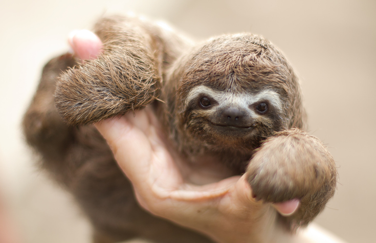 We had no idea sloths could swim, but this *epic* video proves otherwise