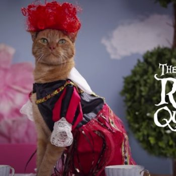 "Um, Disney just filmed an ""Alice in Wonderland"" tea party ENTIRELY. WITH. CATS."