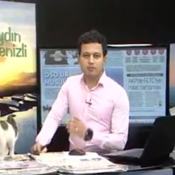 This adorable stray kitten crashed a live news broadcast and we're having *so* many feels