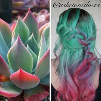Women are dyeing their hair the color of succulents, we're green with envy