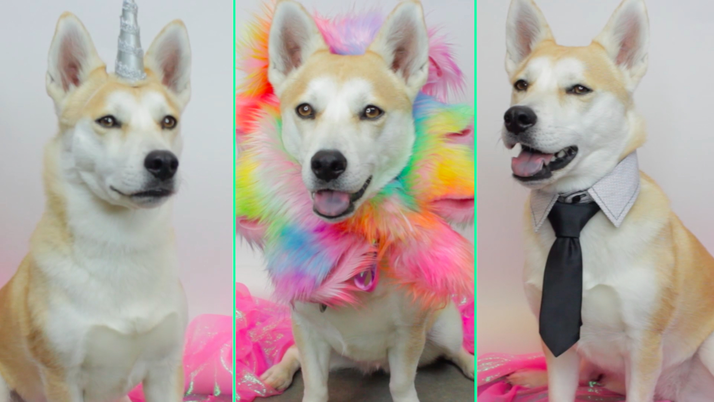 "These ""pawesome"" DIY pet costumes are warming our hearts"