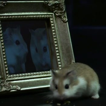 "It is now time to watch ""Harry Potter"" re-enacted with hamsters (complete with tiny Hogwarts)"