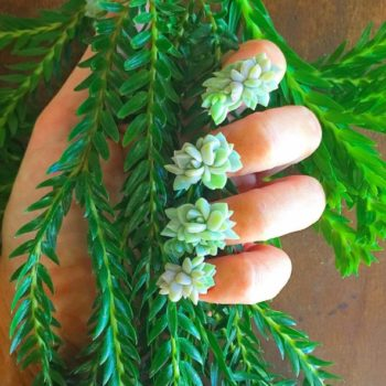 So succulent nails are apparently a thing and we're not sure how to feel