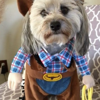 The most adorable Halloween costumes for your dogs, because there's nothing better than dogs in Halloween costumes