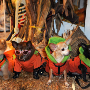 These dogs dressed up in costumes for HOWLoween will totally brighten your Friday
