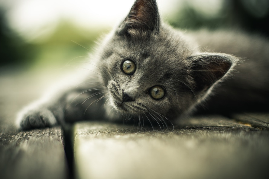 "20 adorable kittens from Instagram to celebrate ""National Cat Day"""