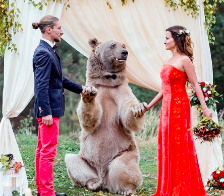 An actual bear officiated this Russian couple's wedding and uhh, what?