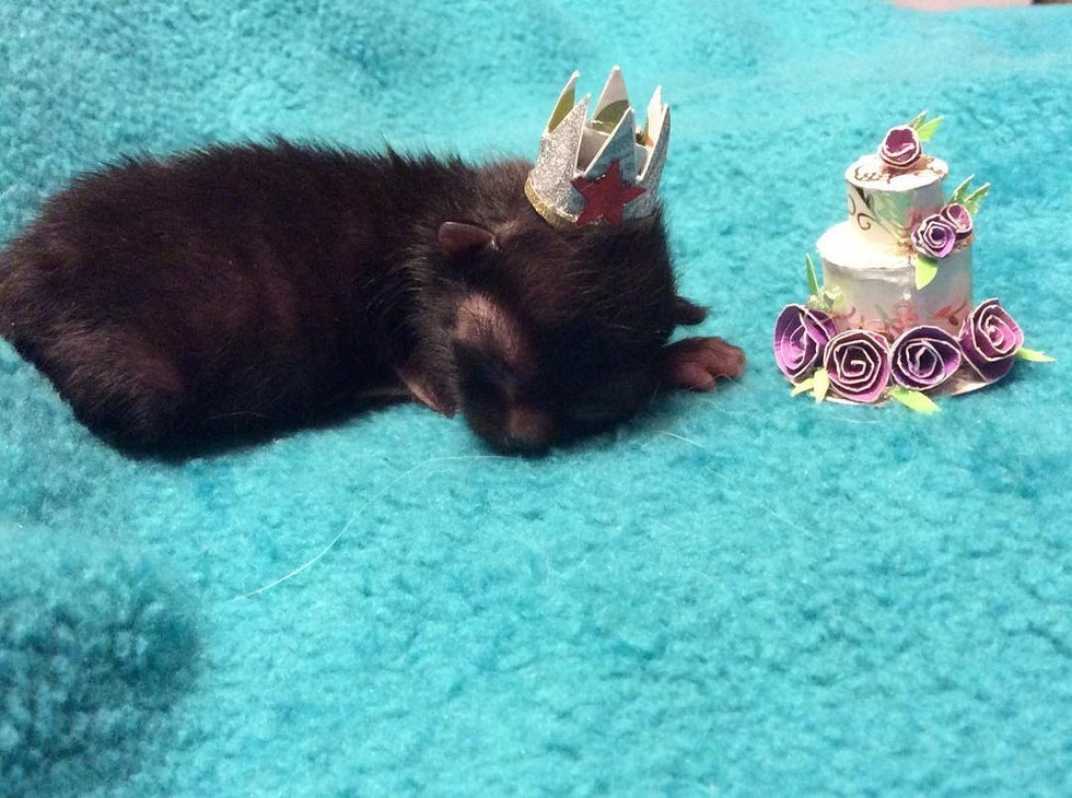 This adorable kitten was rejected by her mom because she's so teensy, and it's giving us all the feels