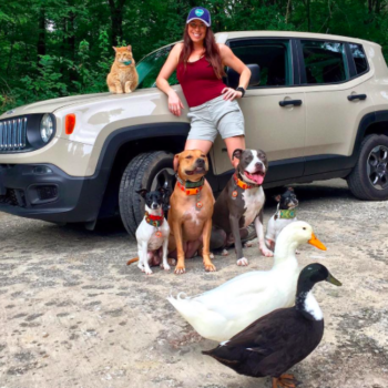 This family of dogs and cats and ducks does everything together and we are squealing!