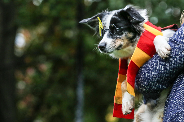 """These are 10 puns only """"Harry Potter"""" fans will love"""