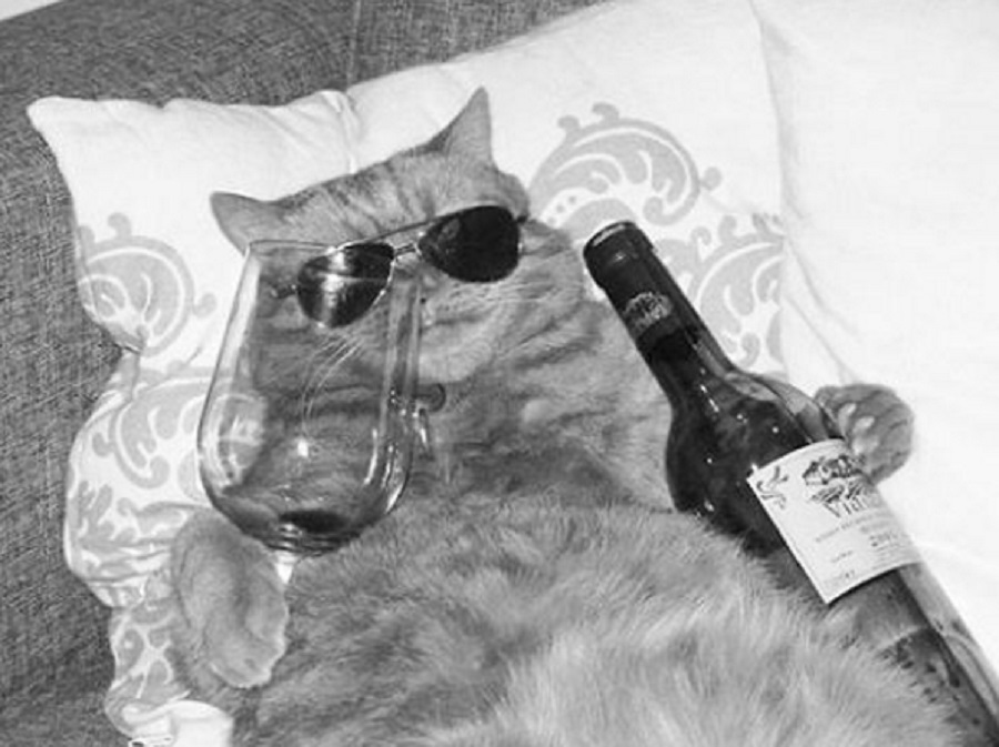 13 photos of animals drinking wine, because we're not the only ones stressing about life at the moment