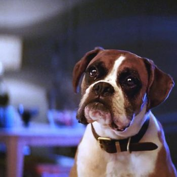 John Lewis' iconic Christmas advert is here to make you feel a tiny bit better