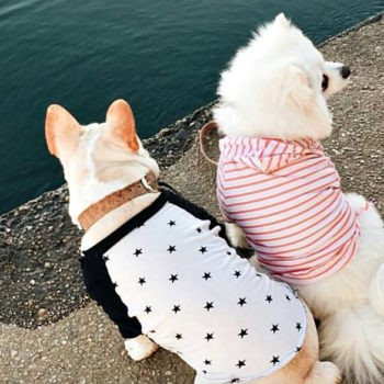 These Insta-famous puppies are giving us #RelationshipGoals and we're actually squealing