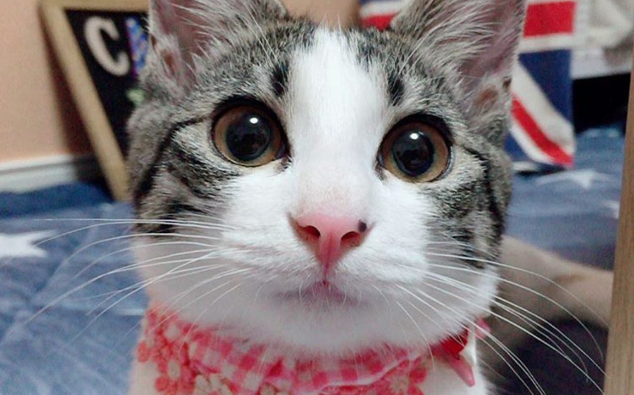 This stunning Instagram kitten has seriously mastered smizing and we're in awe