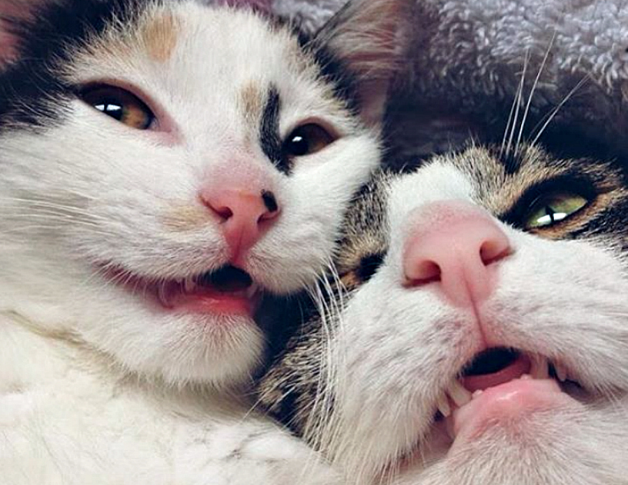 These super close up cat selfies are the positivity we need to wrap up 2016