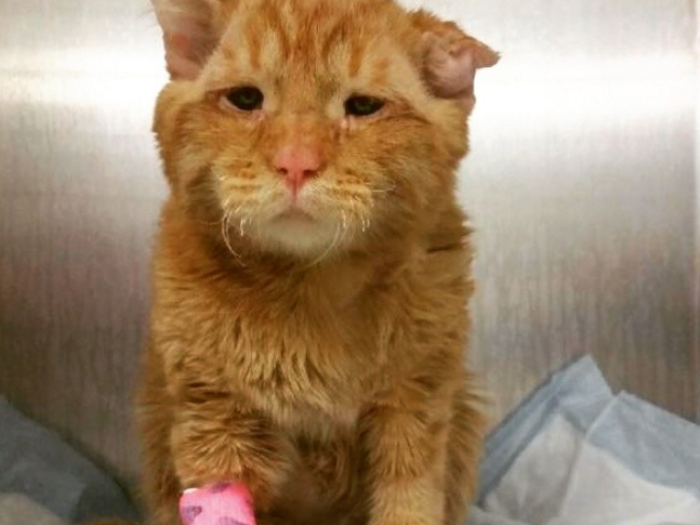 This cat has a permanent sad face but his inspiring story ...  This cat has a ...