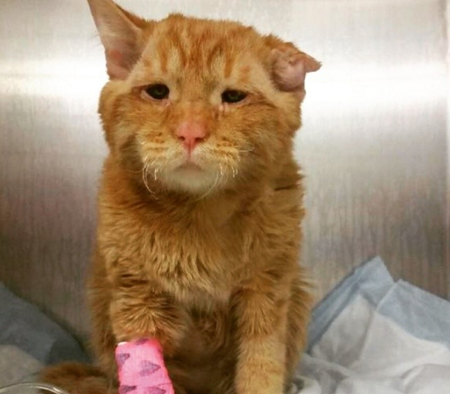 This cat has a permanent sad face but his inspiring story is making our hearts smile
