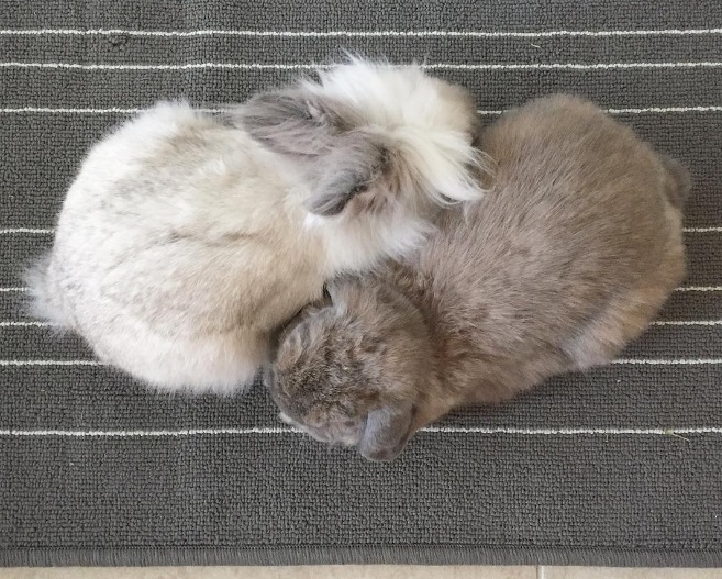 Meet Instagram's two newest and cutest bunny stars, Wally and Ellie