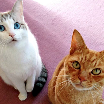 These best friend kittens are an actual dream come true