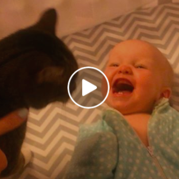This video of a baby losing its mind over a cat is all of us