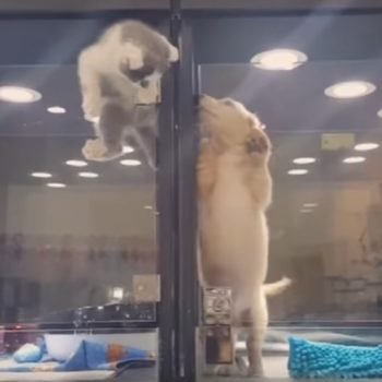This kitty crawled out of its cage to make friends with a puppy, proving animals are the best