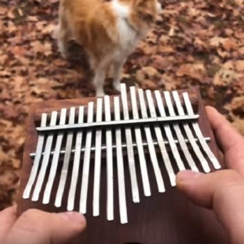 """Here's """"All the Small Things"""" by Blink-182 being played on a kalimba, which yes, you need to see"""