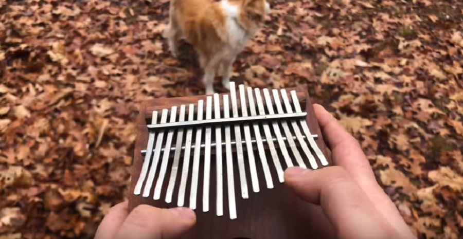 "Here's ""All the Small Things"" by Blink-182 being played on a kalimba, which yes, you need to see"
