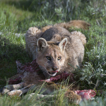Police looking for mountain lions found a literal nightmare instead and it may be scarier than clowns