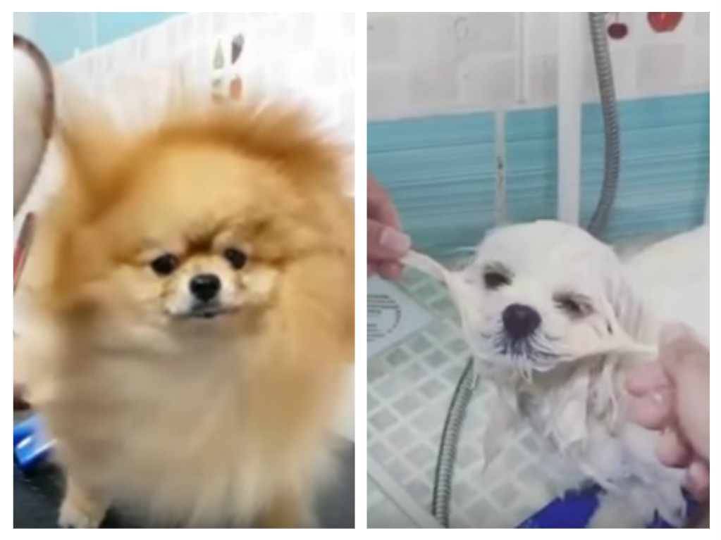 This very joyful video proves that being a dog groomer is the ultimate dream job