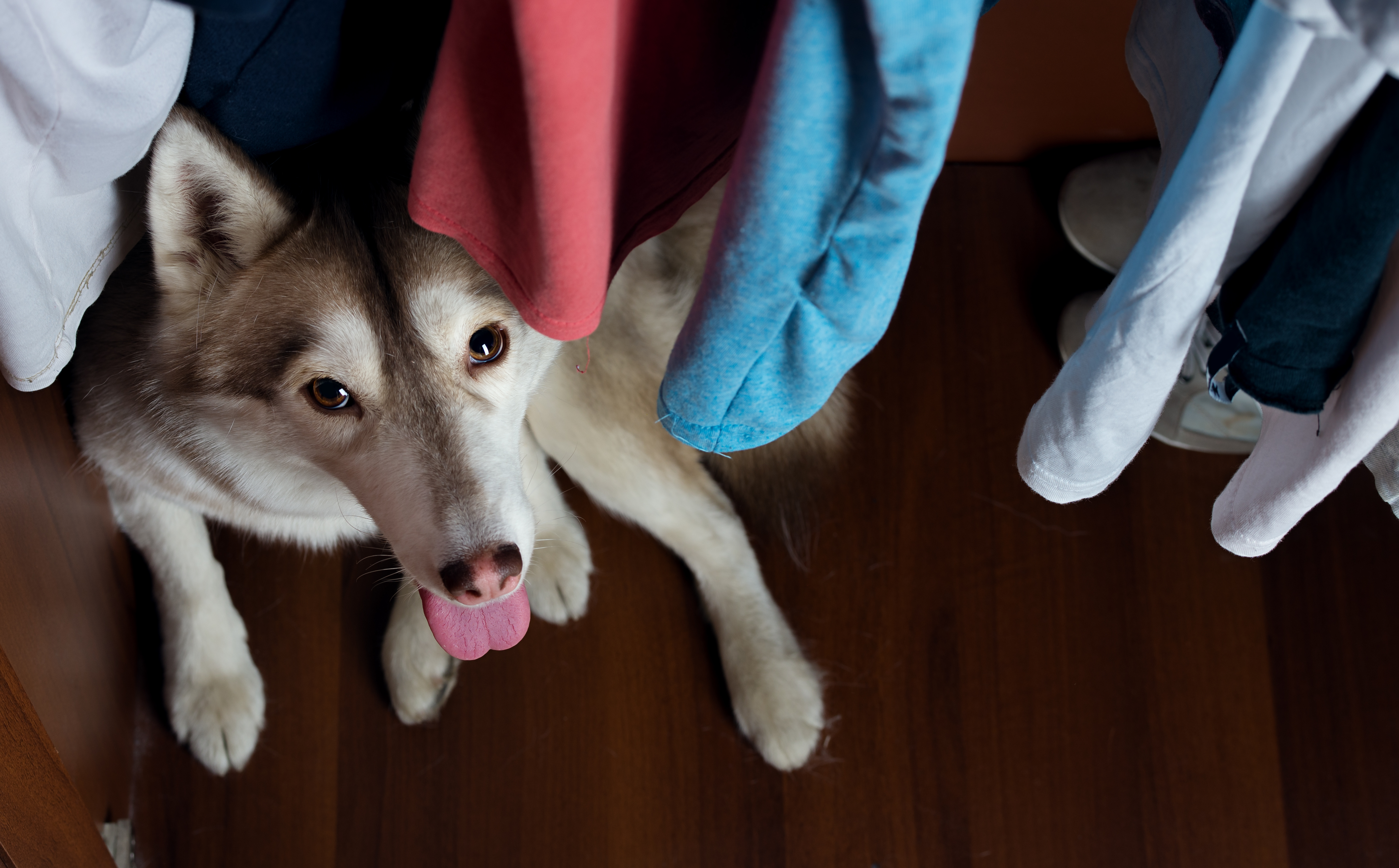 Mystery solved — this is how a dog wears pants