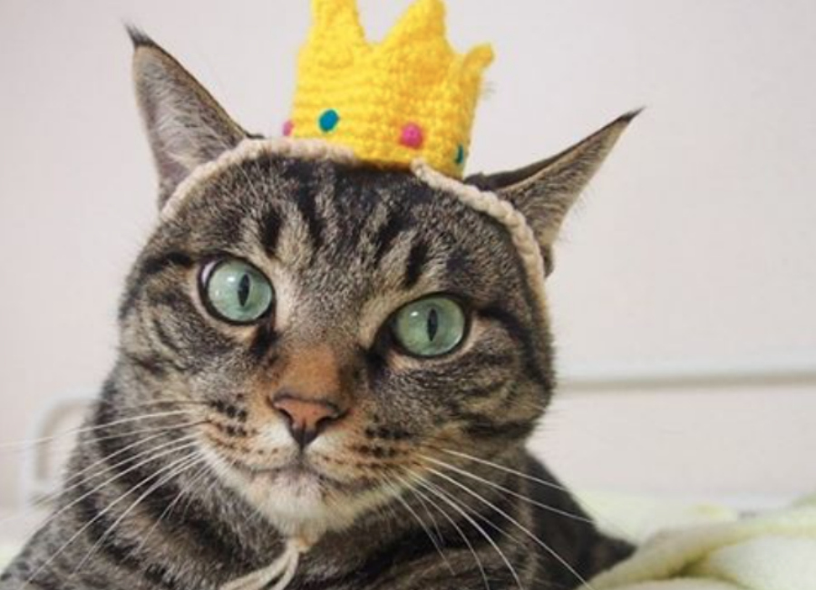 7 cats in costumes that will make you feel all warm and fuzzy inside