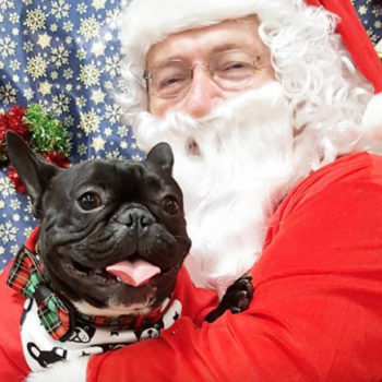 11 Christmas pets that are all of us this holiday season