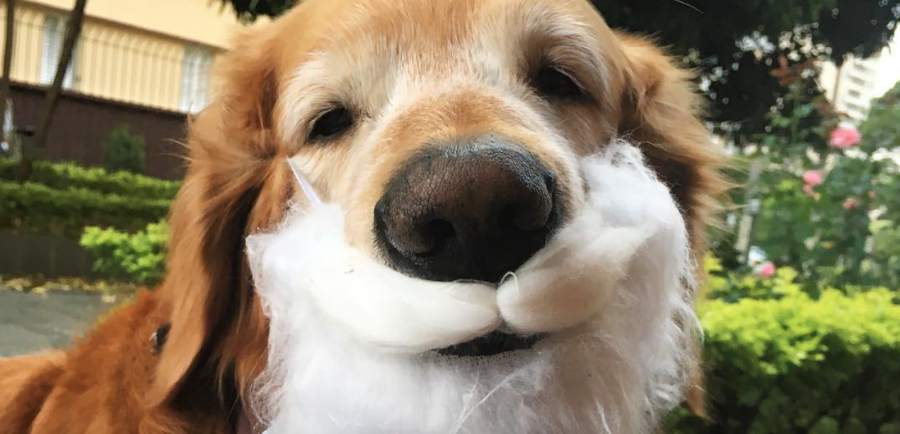This golden retriever had the best Christmas photoshoot we've ever seen and we're crying