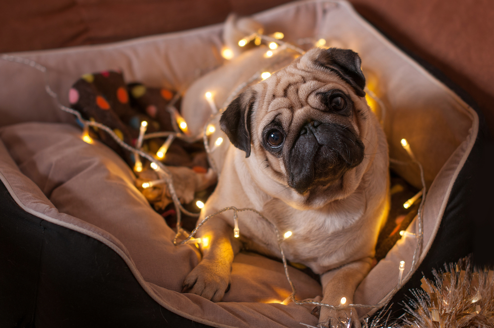 Pugly Christmas sweaters are the cutest holiday trend we've ever seen