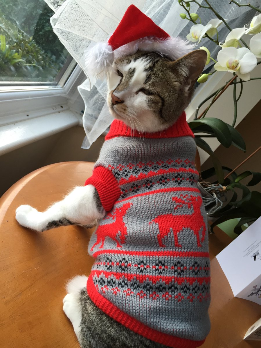 People are dressing cats in adorable Christmas sweaters and the cats are not amused by this